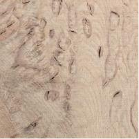 Wild Oak Cluster Burl
